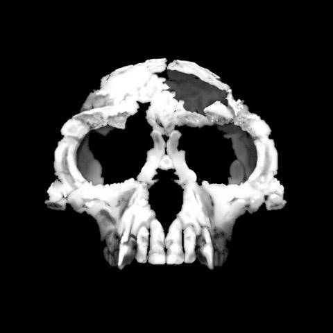 Zanclean Ardipithecus cranium