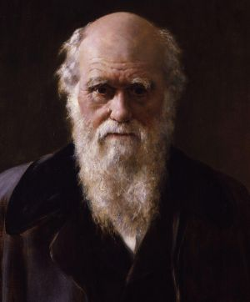 Charles Darwin portrait, 1881