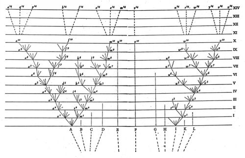 Darwin's illustration of the tree of life from _Origin of Species_