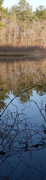 Selmer, Tennessee pond
