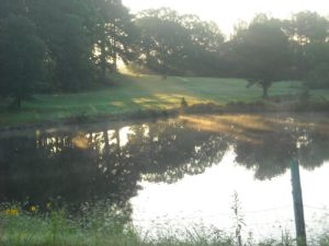 A pond in Selmer, Tennessee