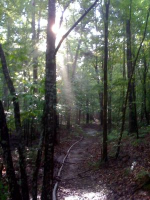 Sunbeam in woods at Rose Creek Village