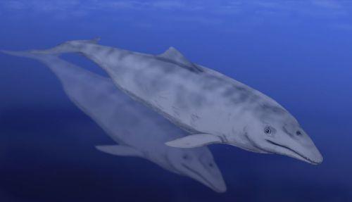 Aetiocetus