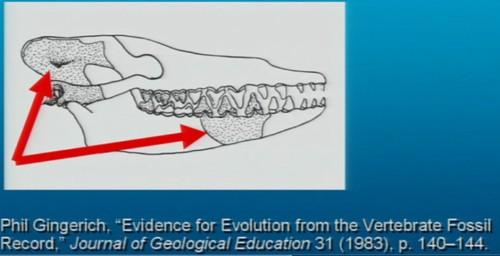 Pakicetus fossil diagram