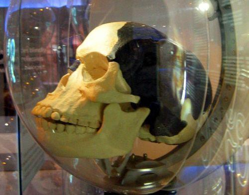 Piltdown Man skull reconstruction